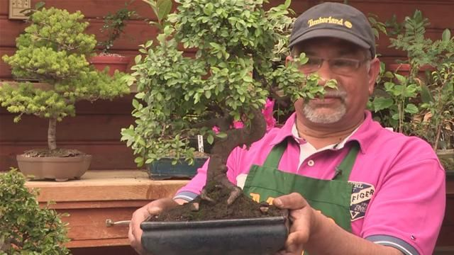 how-to-buy-bonsai-trees.WidePlayer.jpg (640×360)