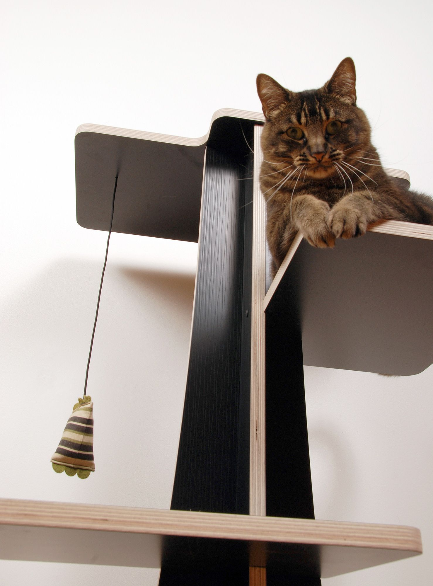 Acacia cat tree in Laminated Birch (Black) with Olive Toy