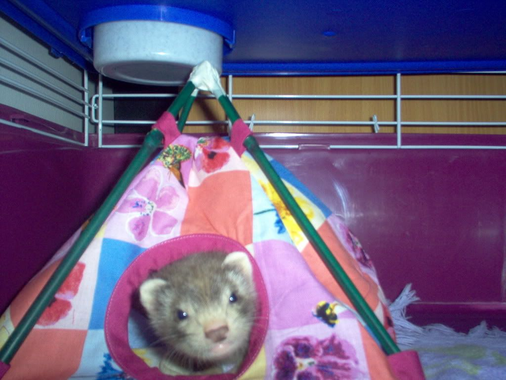 Small Critter Tent Tutorial Too Home Sweet Home Baby Ferrets Small Pets Diy Stuffed Animals