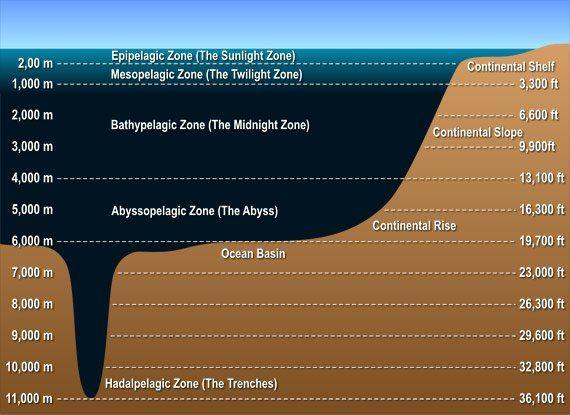 Mariana Trench Diagram1 Pacific Ocean S Mariana Trench At 11 033 Meters 36 201 Feet Deep In Order To Better Illus Ocean Zones Layers Of The Ocean Ocean Deep