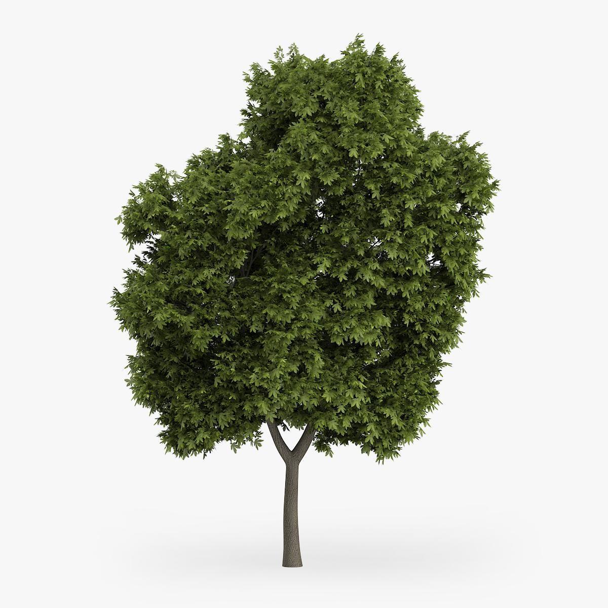 Greek Maple Tree 8m 3D Model ,#Maple#Greek#Model#Tree