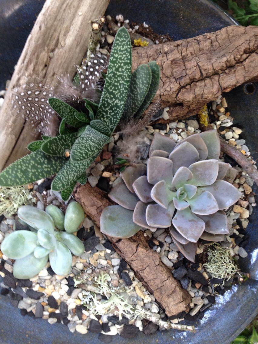 Simple terrarium. Terrarium, Plants, Garden
