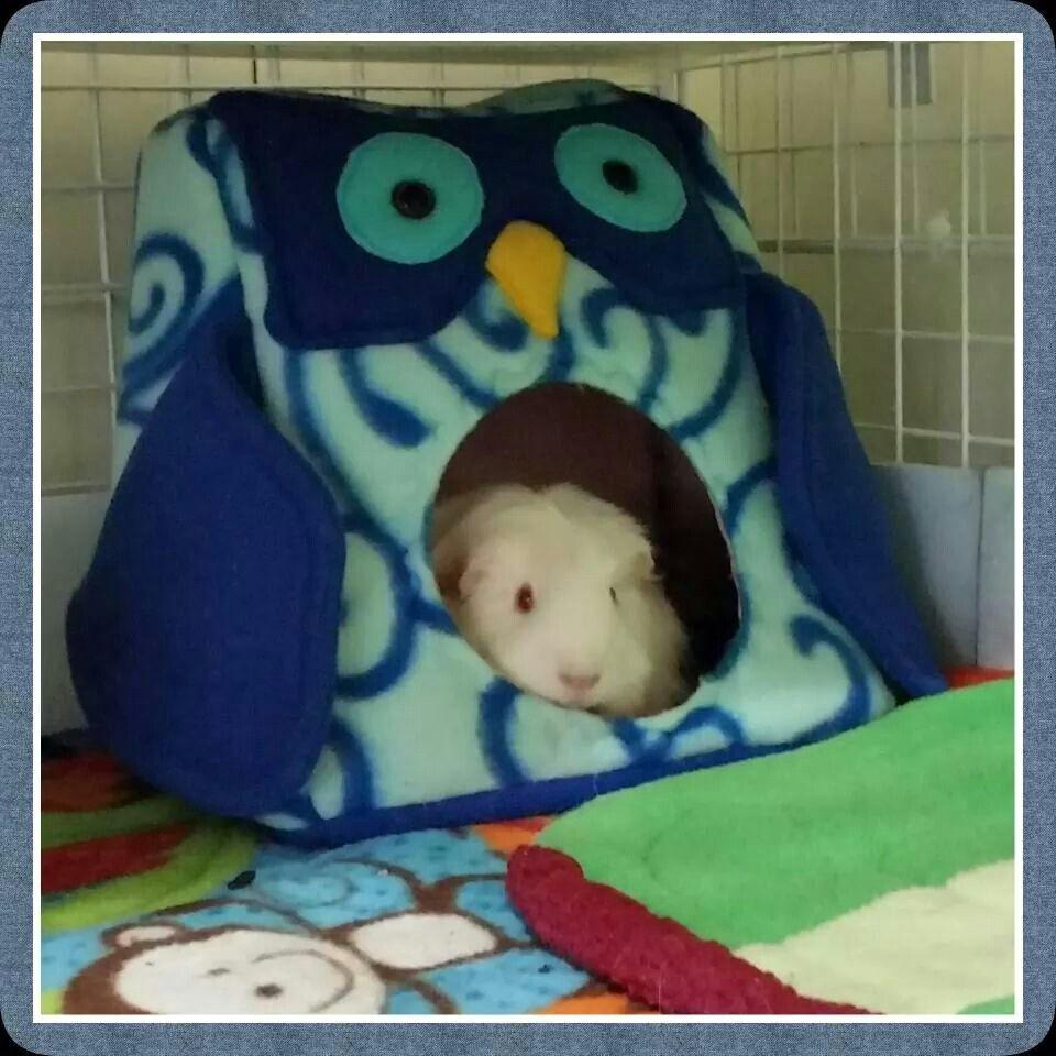 Guinea pig bedding Owls