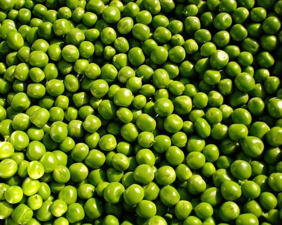 C mo cultivar ricos guisantes en casa plantas red for Como sembrar plantas ornamentales