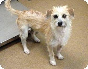 Apple Valley Ca Terrier Unknown Type Medium Terrier Unknown Type Medium Mix Meet Lexi Dog Adoption Kitten Adoption Terrier