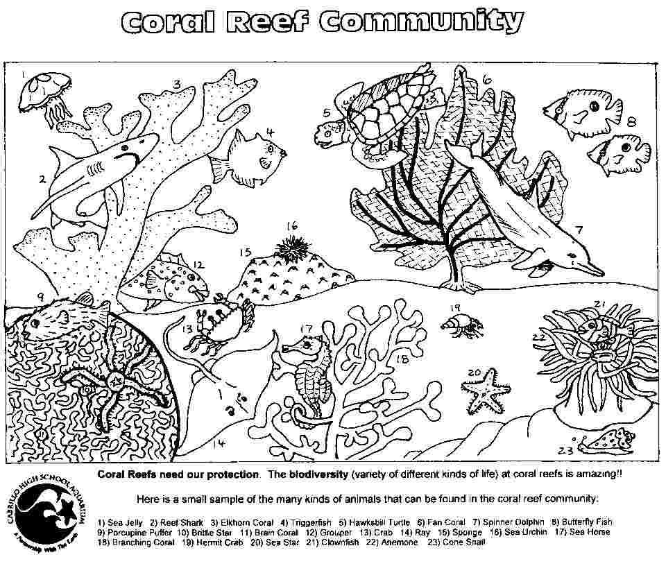 Coloring Festival Free Printable Coral Reef Coloring Pages More