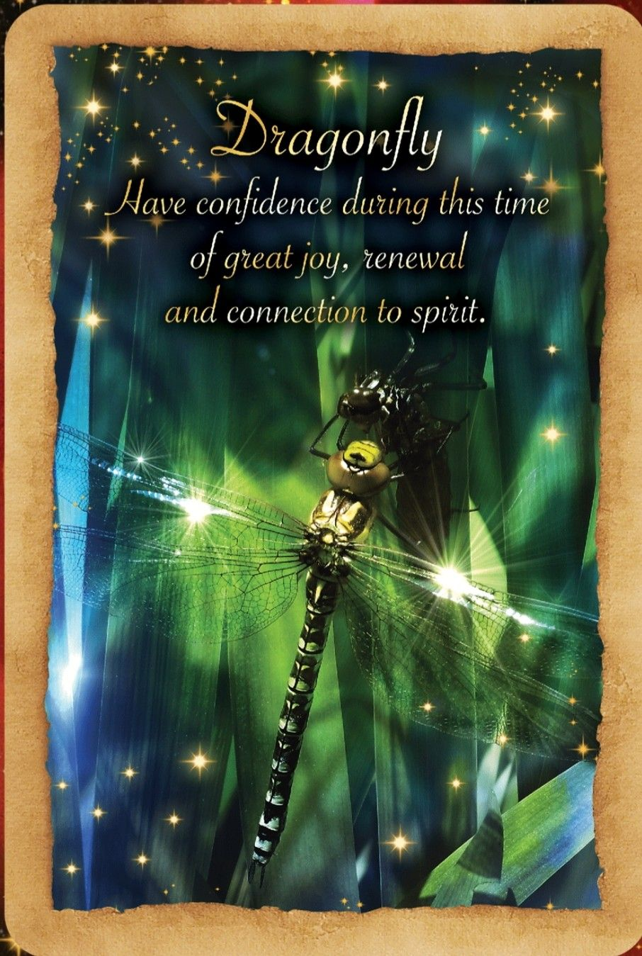 Fortune Reading Cards ~Dragon fly #oracle #fortune #guidance