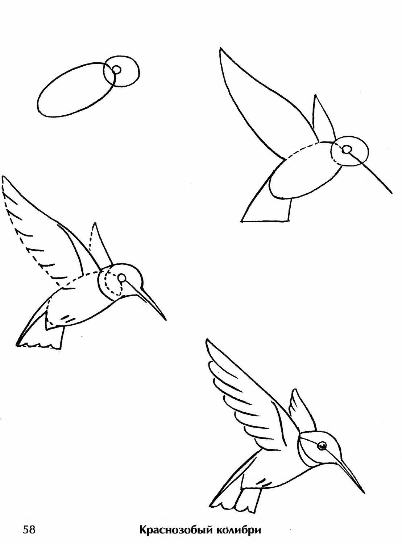 Рисунок птицы поэтапно