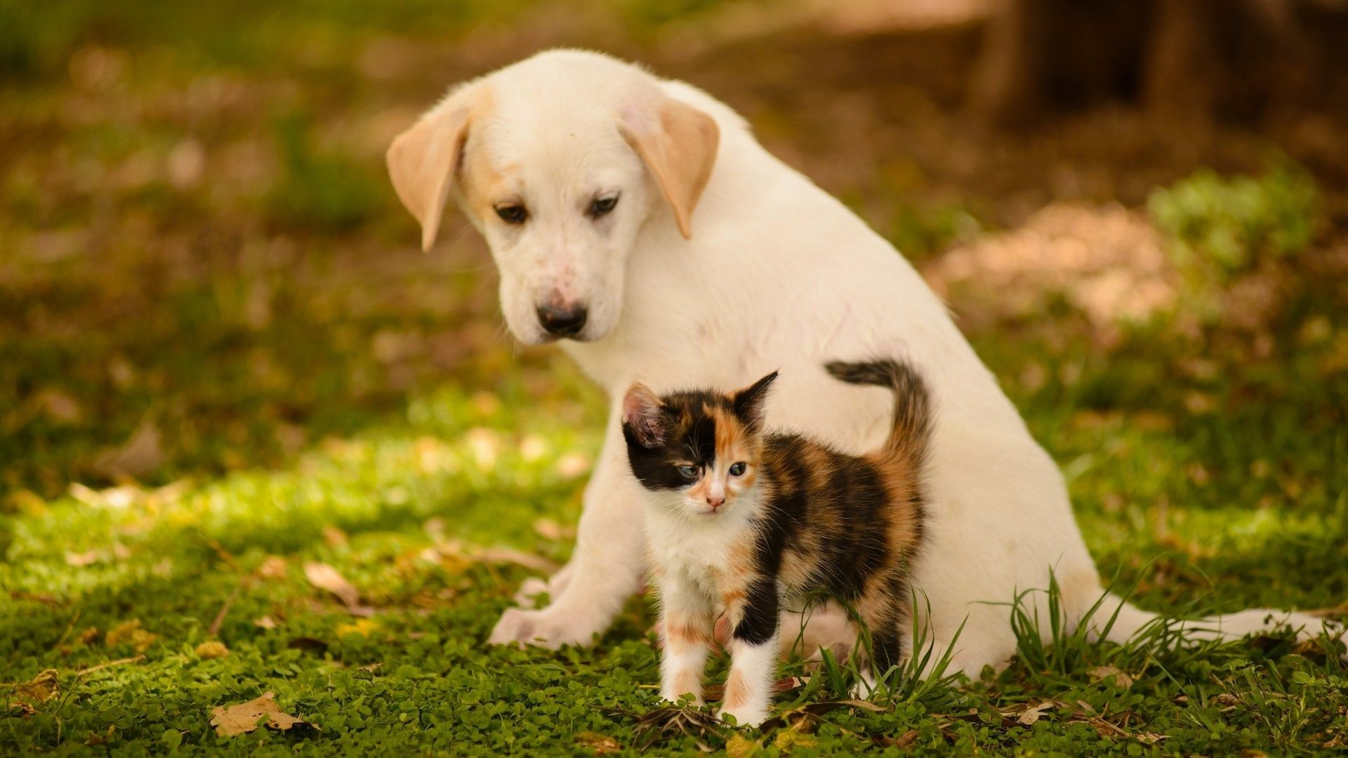 Dog Cat Kitten Friends Baby Wallpaper Hd Kittens And Puppies Cute Puppy Wallpaper Cute Cats And Dogs