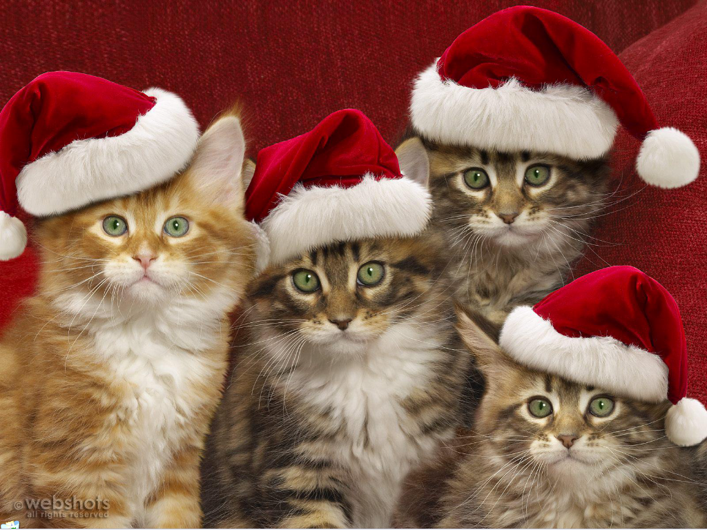Christmas cats animal pictures cute pinterest christmas