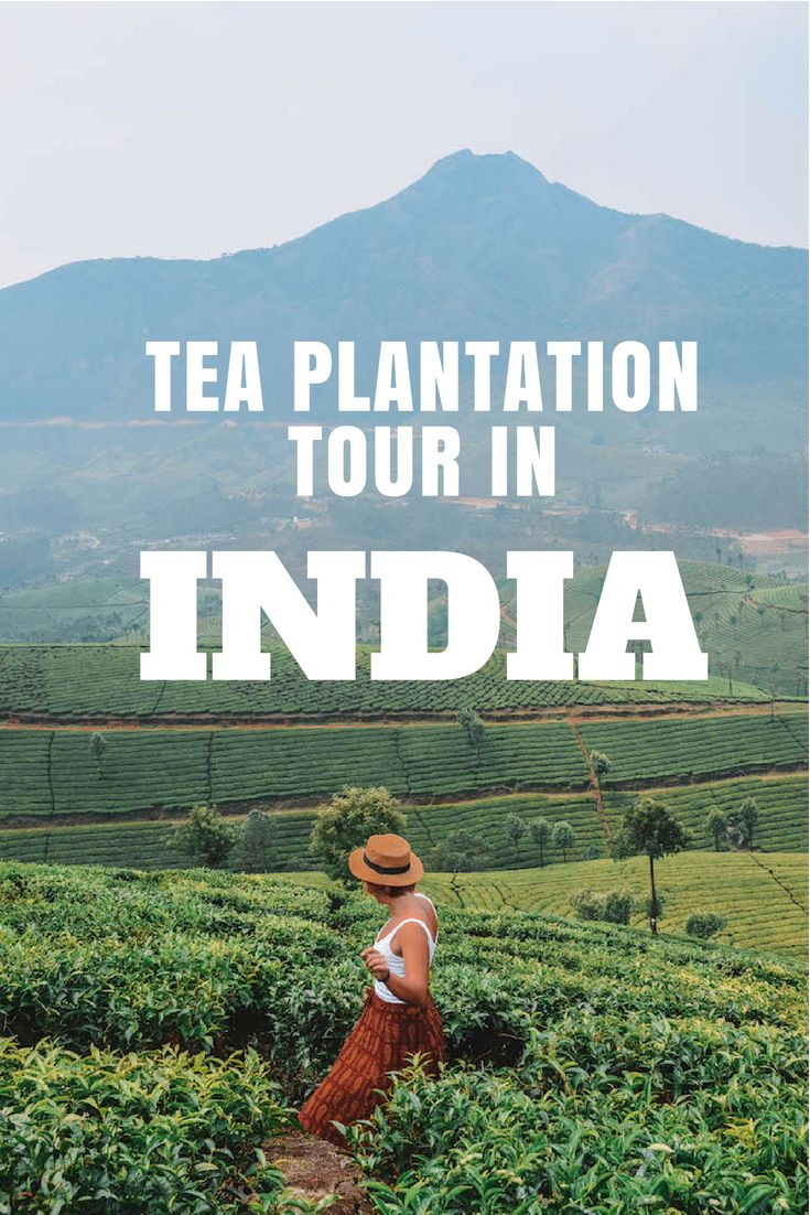 Ultimate Guide To Visiting A Tea Plantation In Munnar