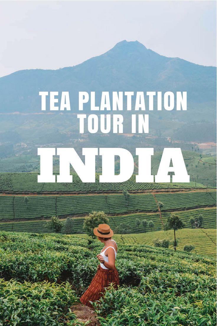 Tony Gebely · Tea Epicure · Taste Differently Photo, Tea