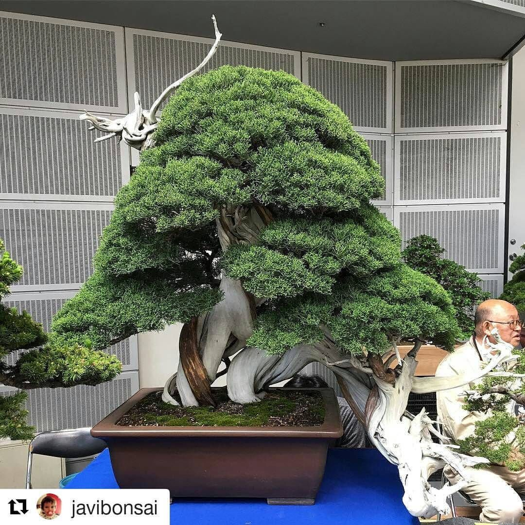 Pin On Bonsai Types Of Trees