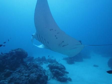 Guam and Palau Wrap Up: Another Successful Field Course Comes to an End