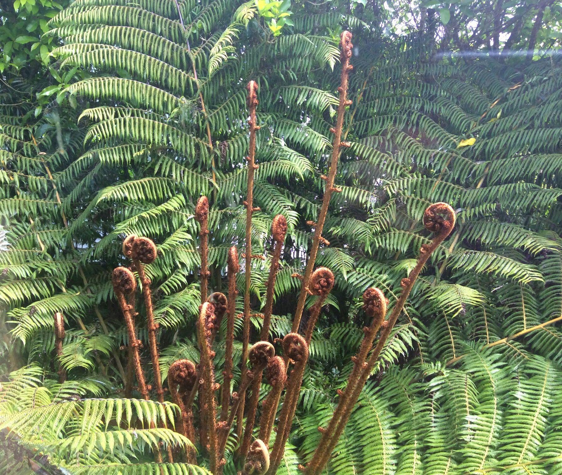 Tree fern outside my window