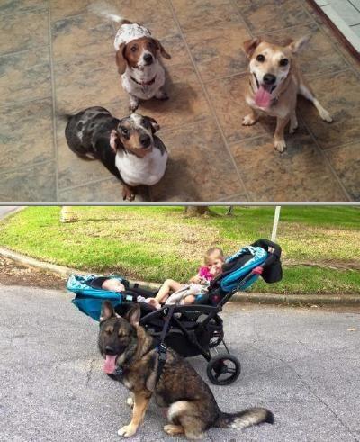 Angel S Basics Dog Training Conducts Animal Behavior Modification