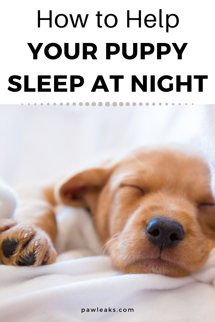 Help My Puppy Won T Sleep Through The Night Pawleaks In 2020 Puppies Dog Psychology Puppy Care