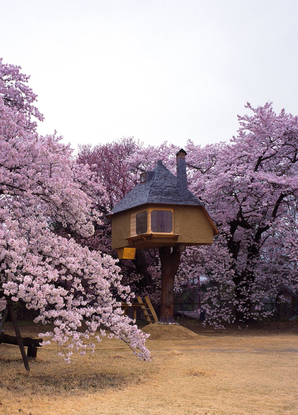Tree house designed by takashi kobayashi japans pioneer tree house tree house designed by takashi kobayashi japans pioneer tree house maker malvernweather Choice Image