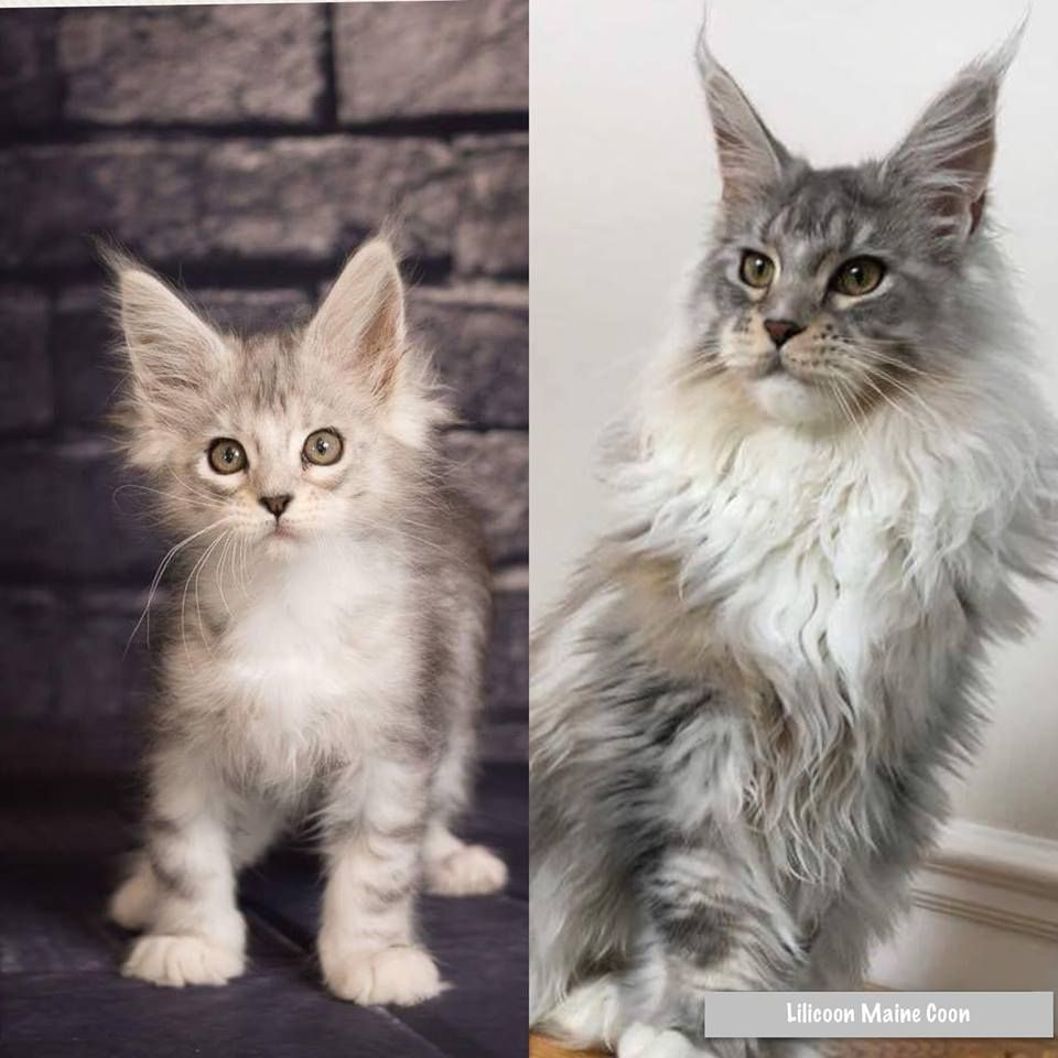 Baby To Grown Up Cute Cats And Dogs Cute Puppies And Kittens Baby Cats
