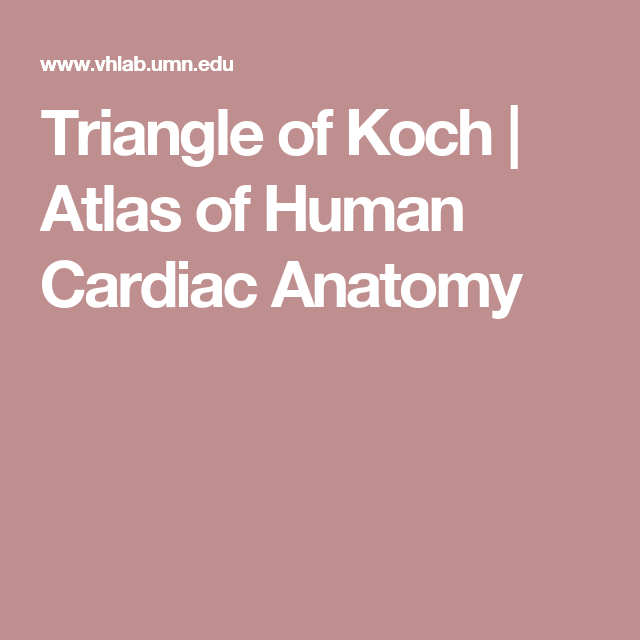 Triangle Of Koch Atlas Of Human Cardiac Anatomy Ep Anatomy Rces