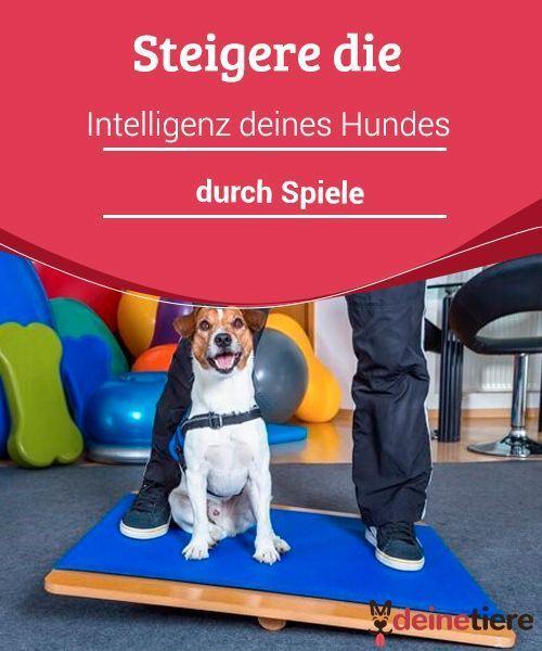Hunde Intelligenz