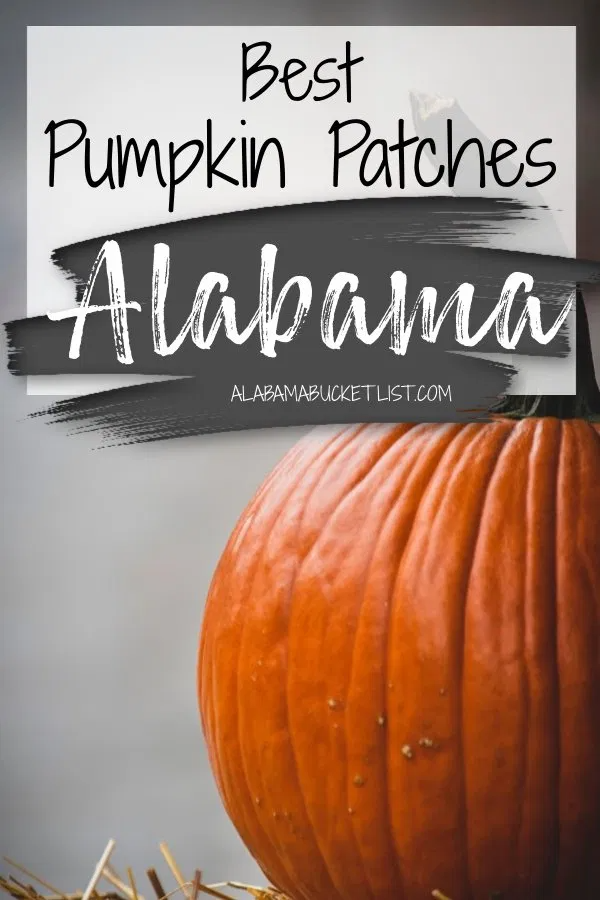 Fall Is Here And With The Autumn Season Comes The Pumpkin Patch A Favorite Fall Activity Here Are The Best In 2020 Usa Travel Destinations Travel General Travel Usa