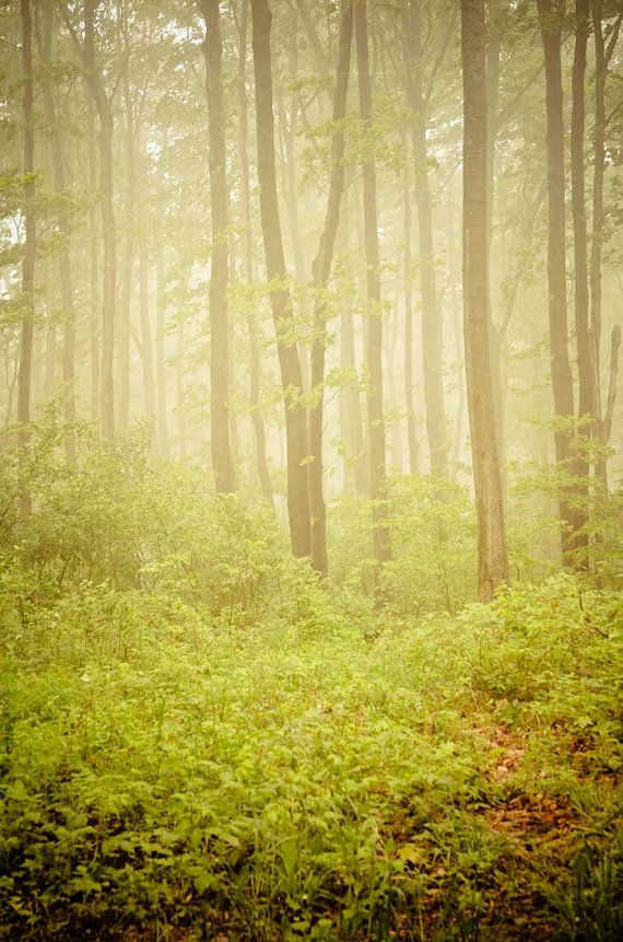 Serenity. green woodland tree print . dreamy nature photography ...