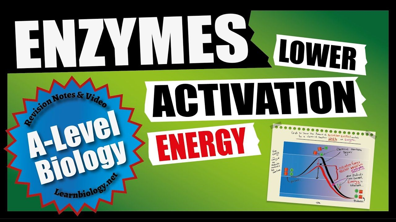 Enzymes Lower Activation Energy A Level Biology Revision