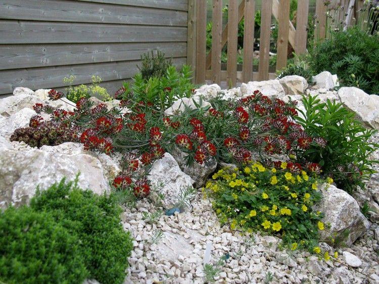 steingarten anlegen welche pflanzenarten sind am besten geeignet garten pinterest. Black Bedroom Furniture Sets. Home Design Ideas