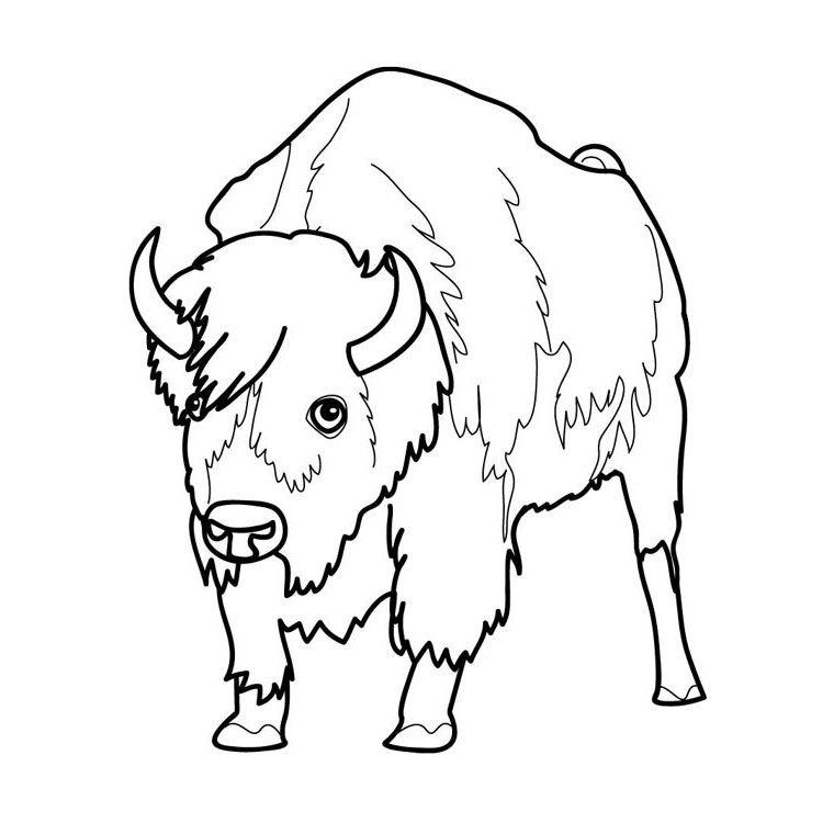 Coloriage bison a imprimer 1 animaux pinterest coloriage colorier et coloriage gratuit - Bison coloriage ...