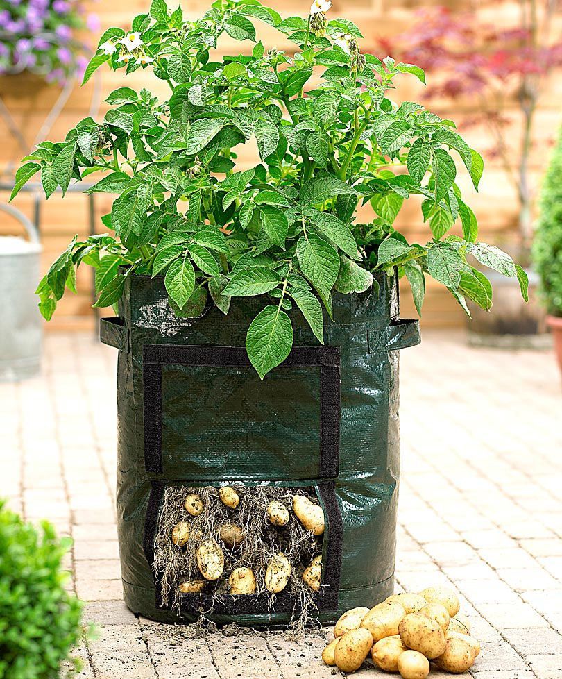 Potato Grow Bag By Bakker Raised Garden Planters Growing