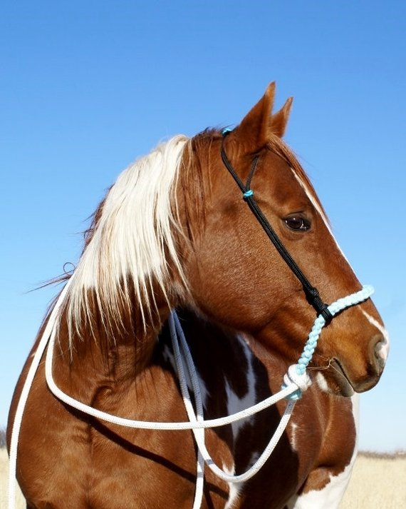 This Item Is Unavailable Horses Horse Halters Rope Bridle