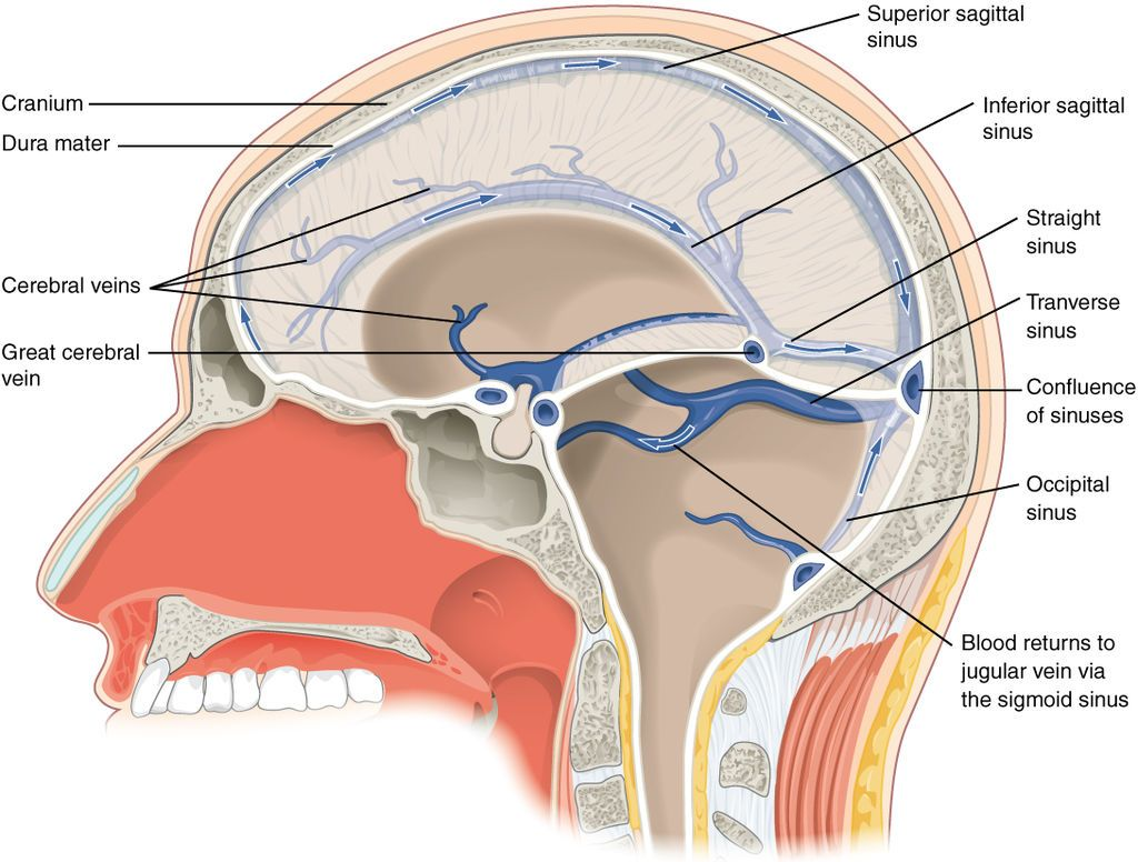1315 Brain Sinuses - Ventricular system - Wikipedia, the free ...