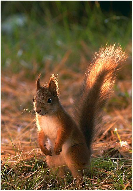 Squirrel! Cute