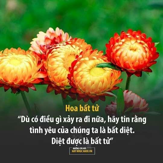 [ Tổng Hợp ]  Những câu nói ngôn tình hay nhất  - Ý nghĩa của các loài hoa