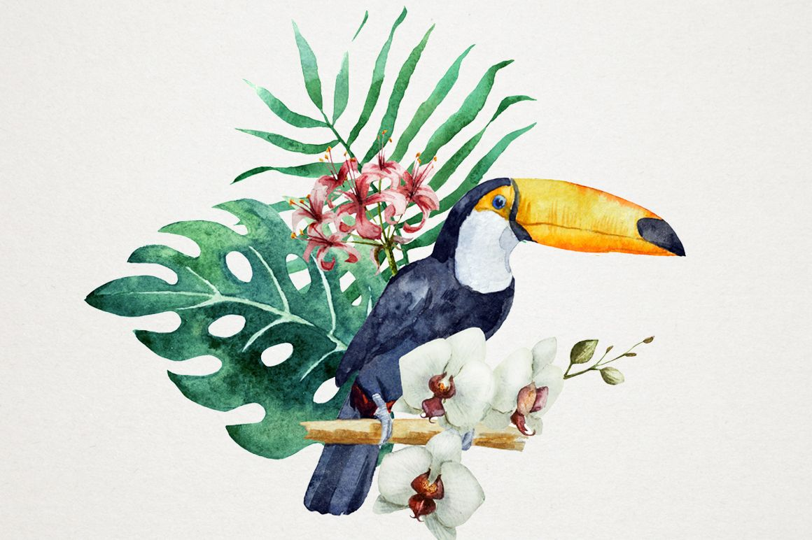 самих тропическая птица рисунок можете разослать интернету