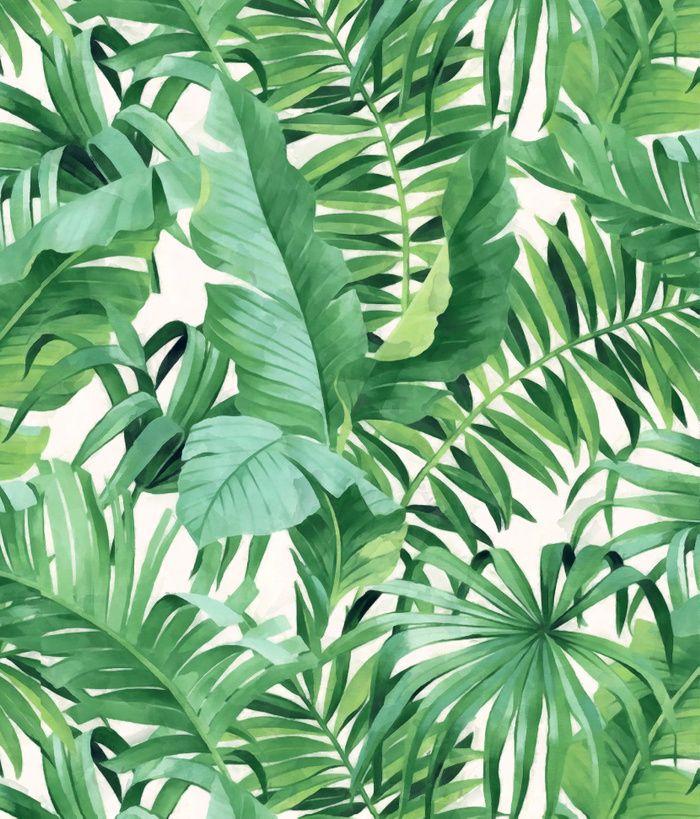 Tropical Leaf Wallpaper Palm Tree White Green A Street Prints Paste