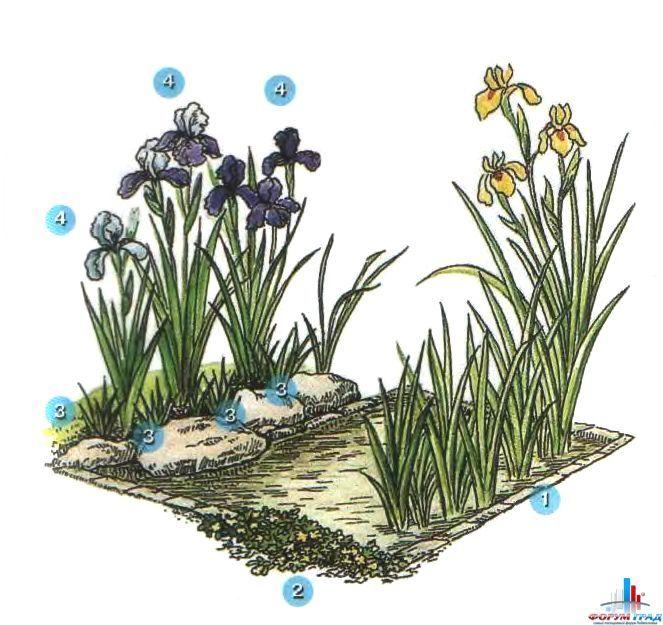 Декорирование прудов растениями: учитываем сроки цветения, особенности произрастания, цветовую гамму - Нет лучшего украшенья для сада, чем гладь озерка или шум водопада. Вода – лучший спутник в минуты покоя. Хотели б на даче иметь вы такое? - Форум-Град