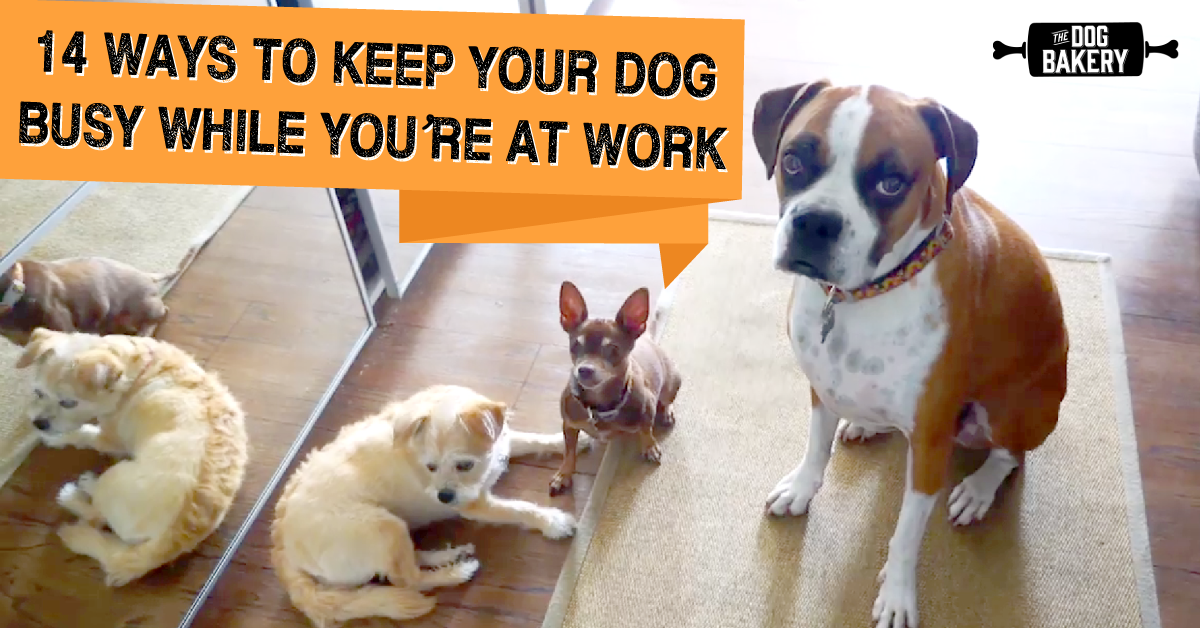 14 Ways To Keep Your Dog Busy While You Re At Work Bored Dog Dogs Puppy Training