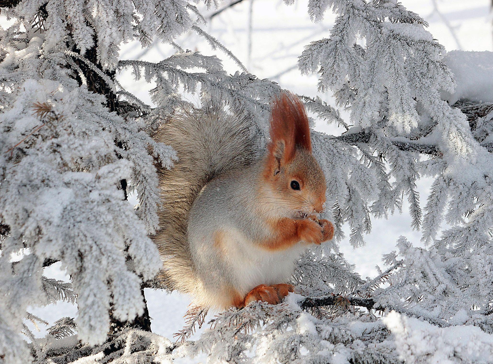 лесные животные фото новогодние нас