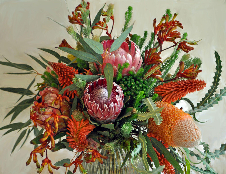Protea and Banksia Protea CaGrown Australian native