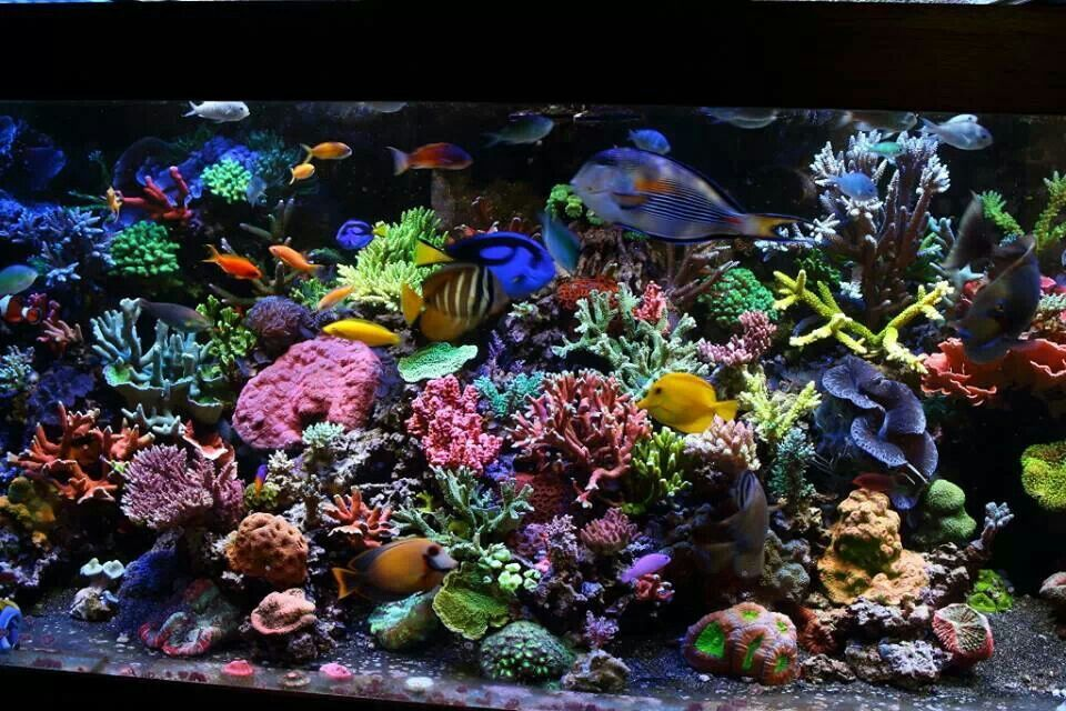colorful reef tank gorgeous i saltwater tanks