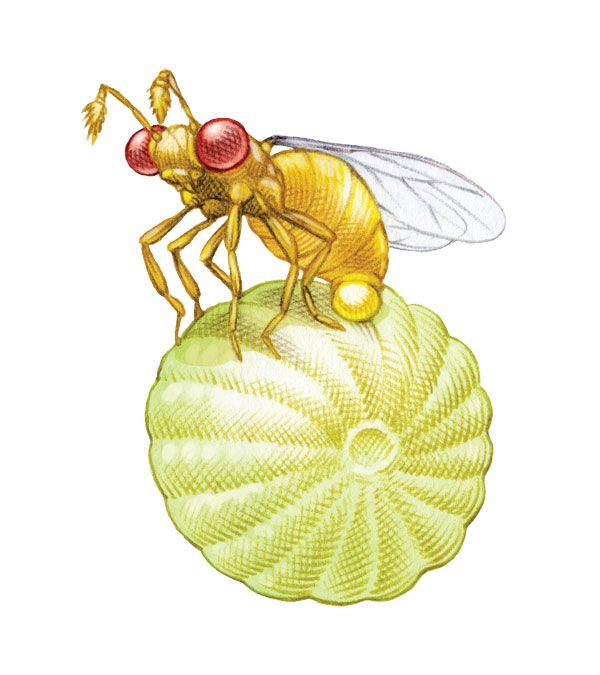 Trichogramma Wasps Helps With Natural Pest Control Mother Earth News Beneficial Insects Natural Pest Control Insect Eggs