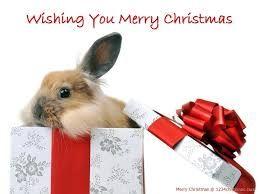 Afbeeldingsresultaat Voor Merry Christmas Rabbit Hase
