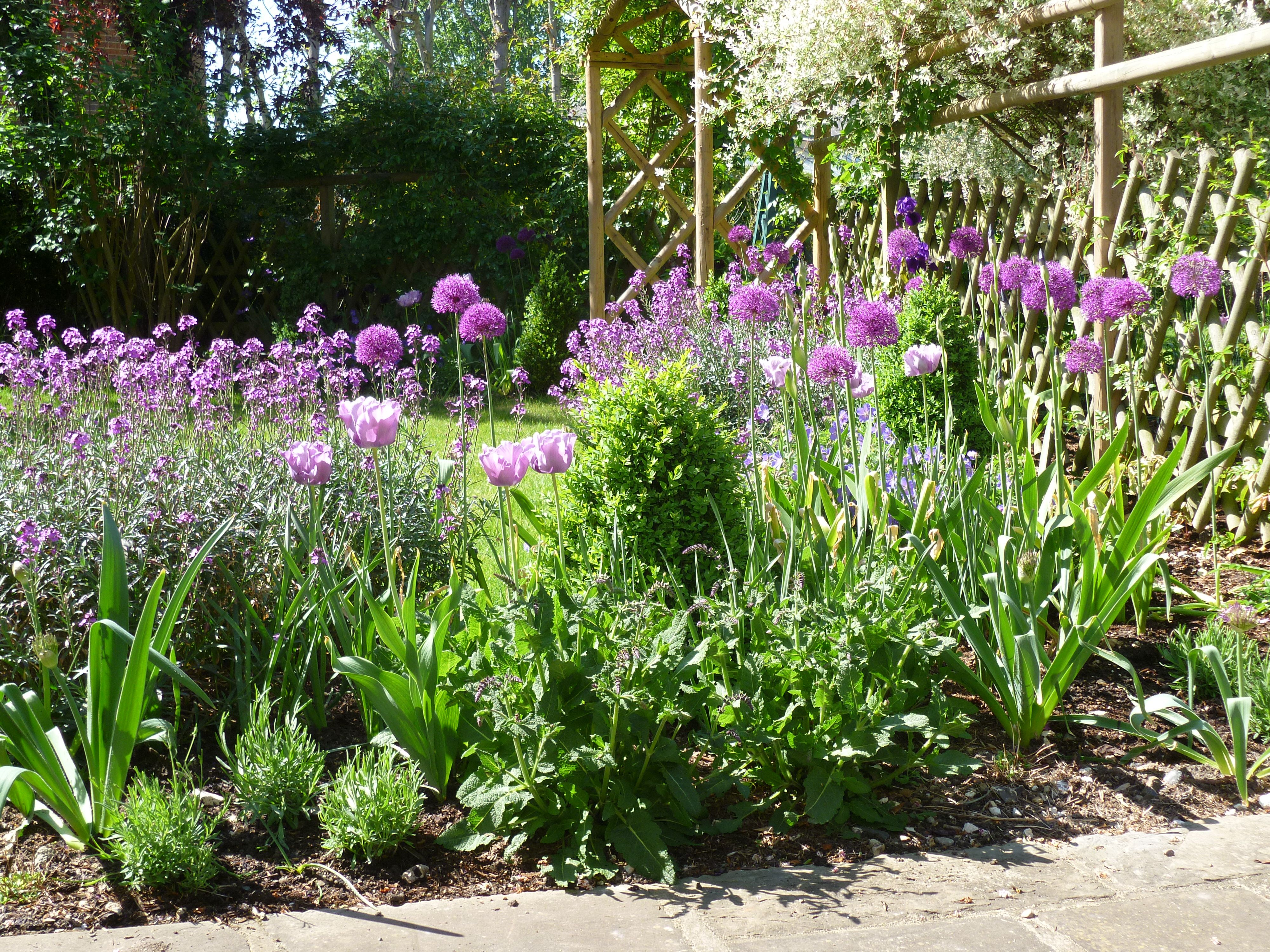 In spring the garden is full of tulips and Alliums