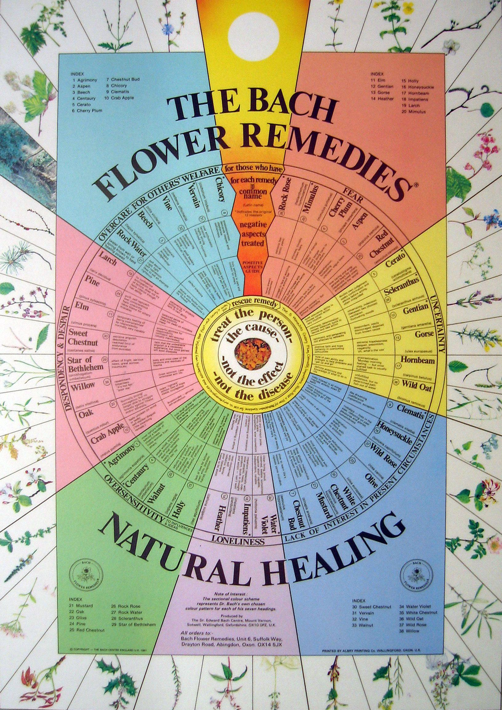 The Bach Flower Remedies Natural Healing Bach Flower Remedies Flower Remedy Flower Essences Remedies