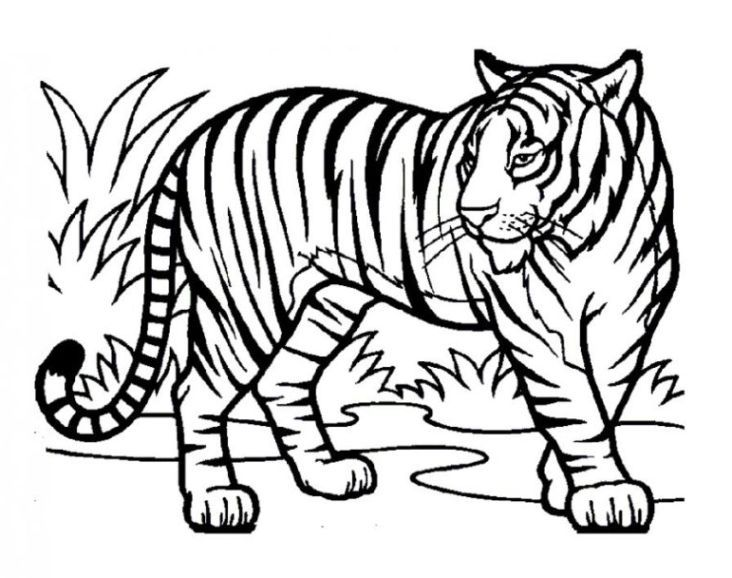 tiger ausmalbilder – Ausmalbilder für kinder | coloring pages ...