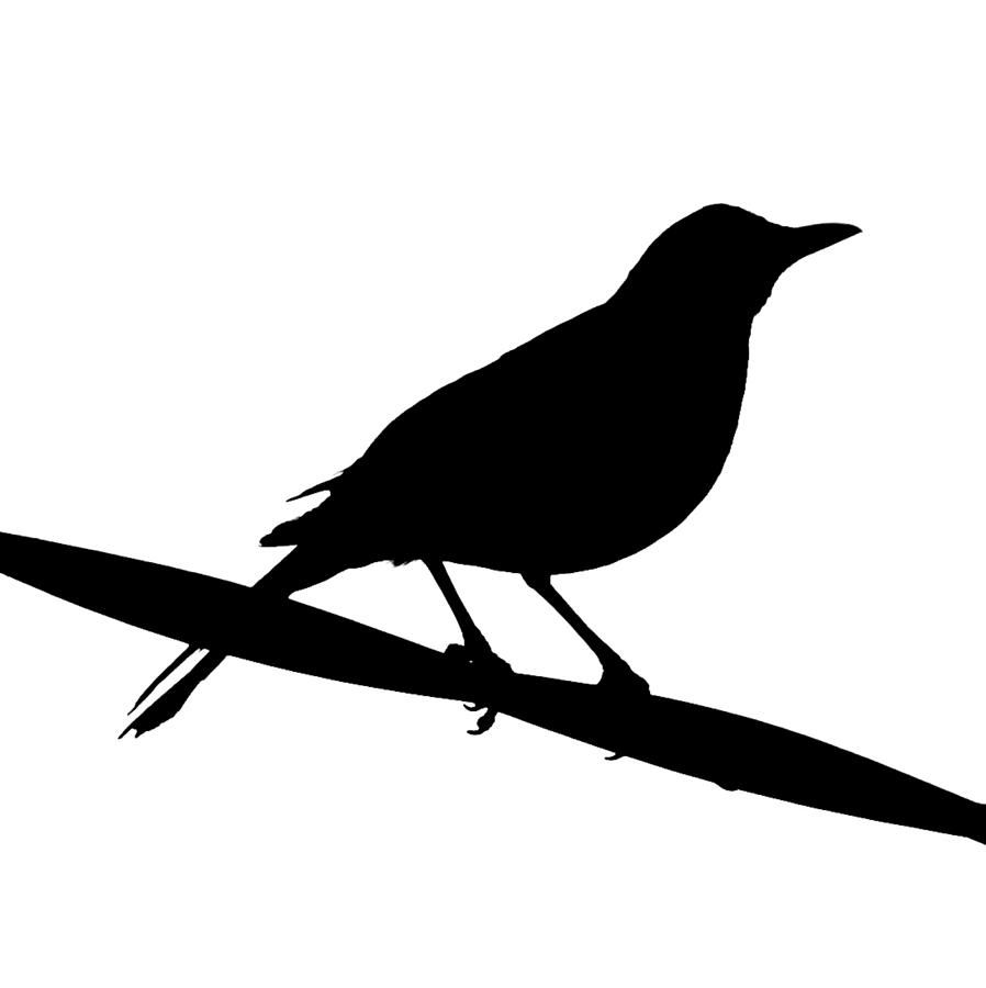 clip art blackbird clipart best new projects pinterest clip art rh pinterest co uk  blackbird clipart black and white