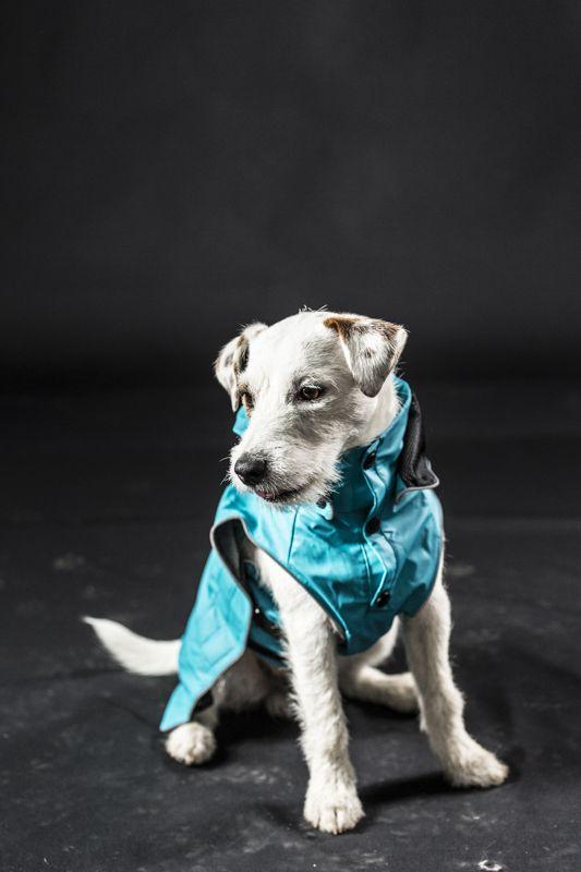 Let It Rain With Rukka Raincoat Dogs Animals Raincoat