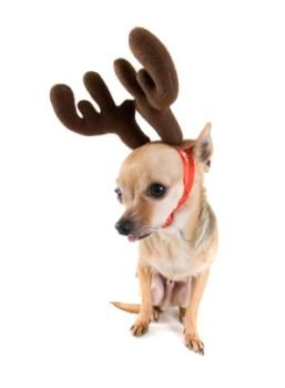 Max The Grinch Dog Costume Grinch Dog Costume The Grinch Dog